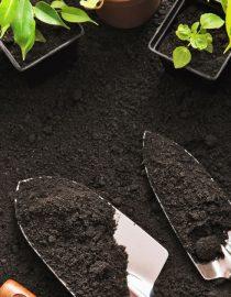 The Health Benefits of Gardening for Diabetics