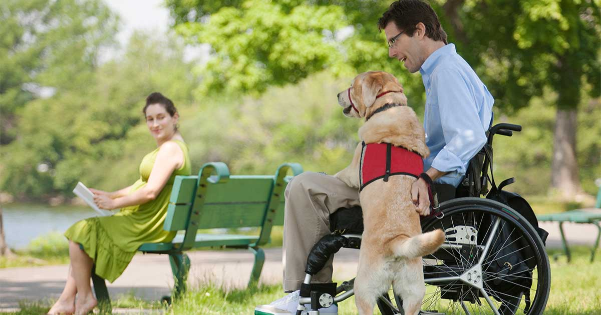A diabetic alert dog wearing a red vest sitting next to a man in a wheelchair.